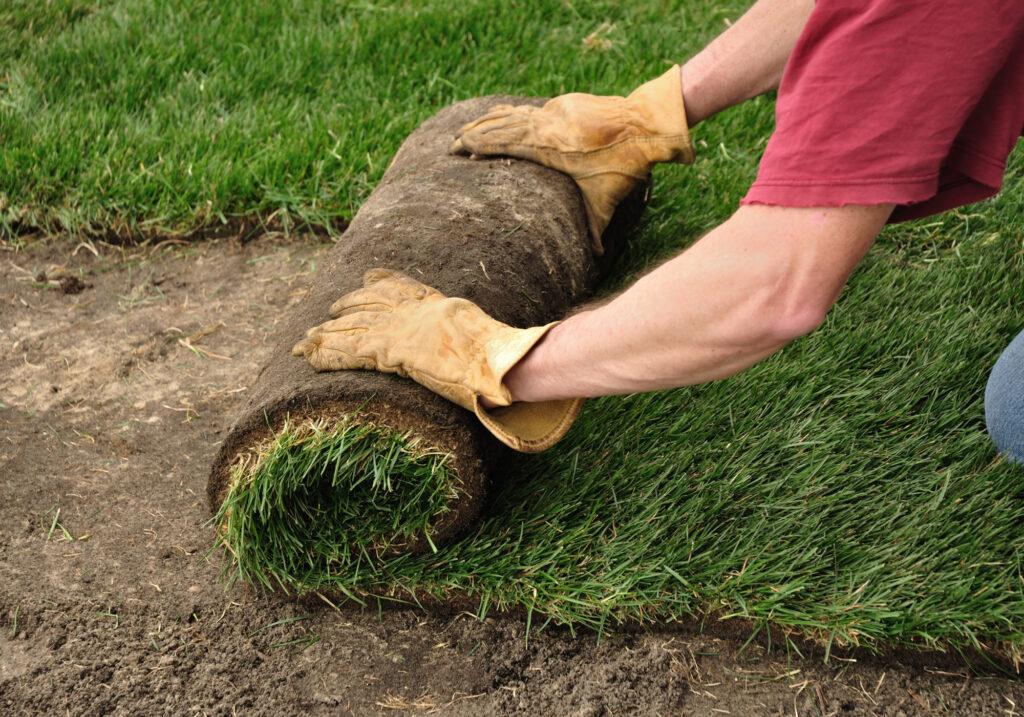 grass-AdobeStock_39083373